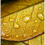 gewone regendruppels op herfstblad