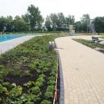 Zwembad Waterdam: borders worden steeds groener