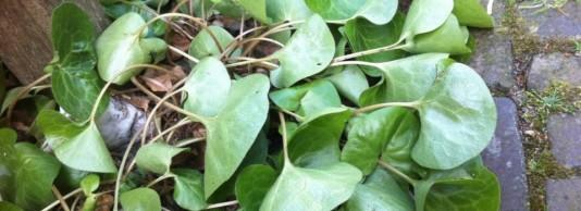 Tips voor de tuin bij hittestress
