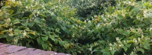 Woekeraars in het wild (en in de tuin!)