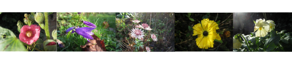 bloemenrand1